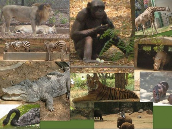 Mysore photos, Mysore Zoo - Collage