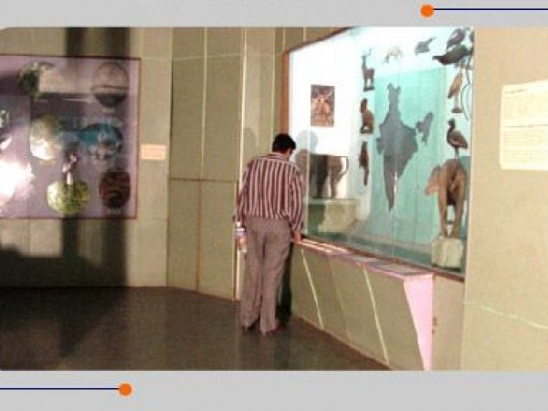 Mysore photos, Regional Museum of Natural History - A Gallery