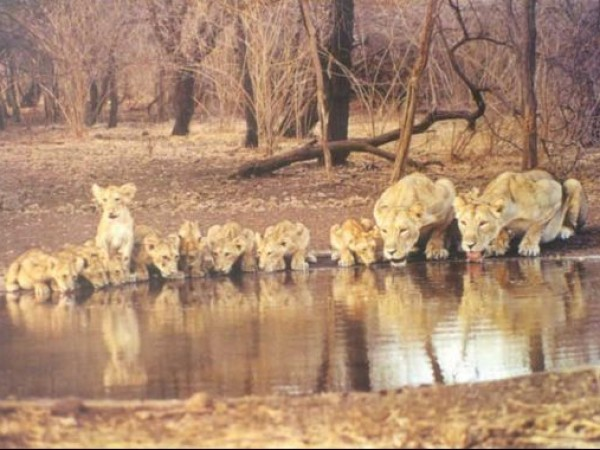 Gir National Park photos, Gir National Park