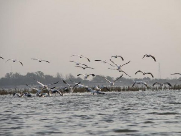 Ahmedabad photos, Nalsarovar Bird Sanctuary - Birds of Flock