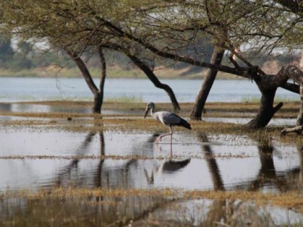 Ahmedabad photos, Thol Lake Bird Sanctuary - Lazing Around