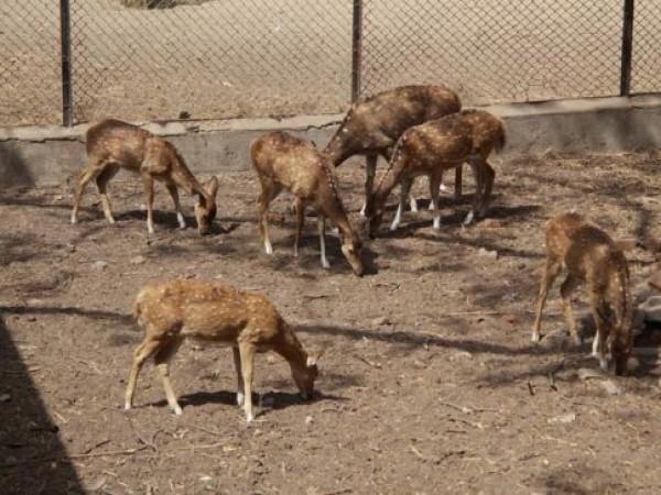 Vadodara photos, Sayaji Baug - Deer Park