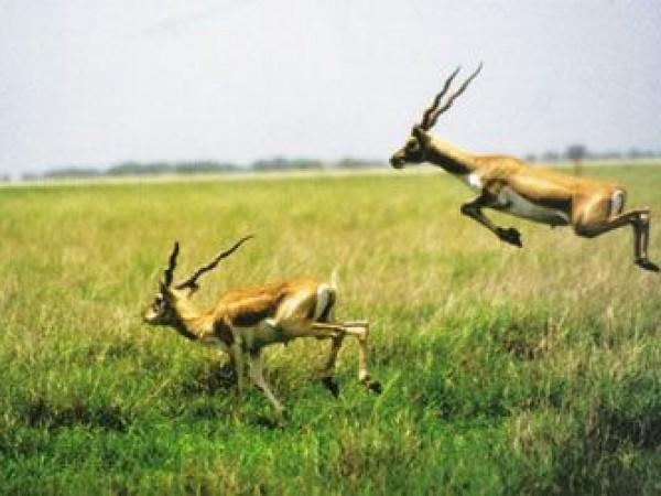 Bhavnagar photos, Velavadar Black Buck National Park - Hopping Around