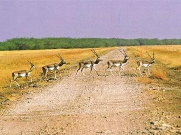 Bhavnagar photos, Velavadar Black Buck National Park - From the Park