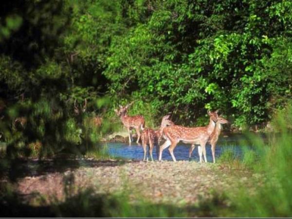Porbandar photos, Barda Hills Wildlife Sanctuary