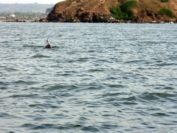 Goa photos, Baga Beach - Dolphins at Baga Beach