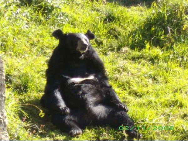 Nainital photos, Zoo - Black Bear