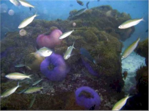Lakshadweep photos, Lakshadweep - Underwater Images