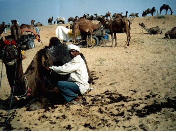 Pushkar photos, Pushkar Cattle Fair