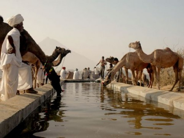 Pushkar photos, Pushkar watering hole