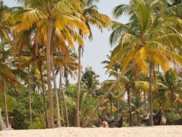Alleppey photos, Alleppey beach - Palm Trees
