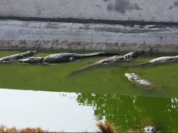 Thiruvananthapuram photos, Neyyar Dam and Wildlife Sanctuary