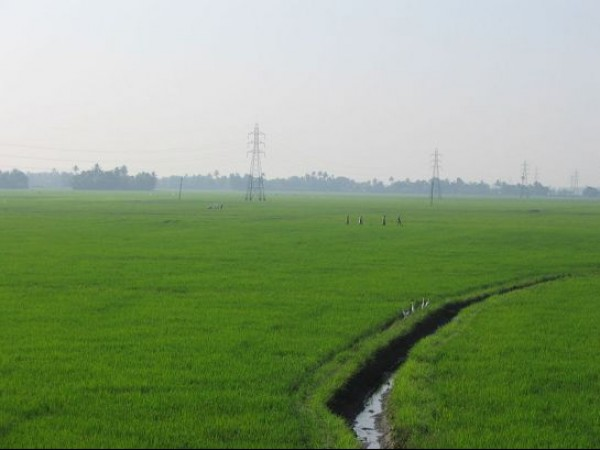 Alleppey photos, Kuttanad - Paddy Fields