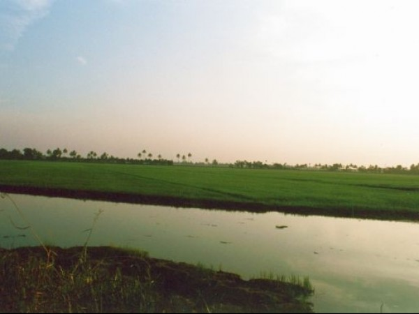 Alleppey photos, Kuttanad - Beautiful Paddy Fields