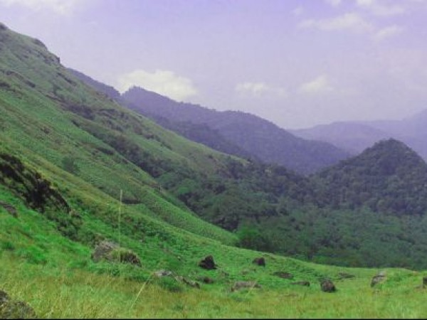 Kalpetta photos, Chembra Peak - Lovely Greenish Yellow