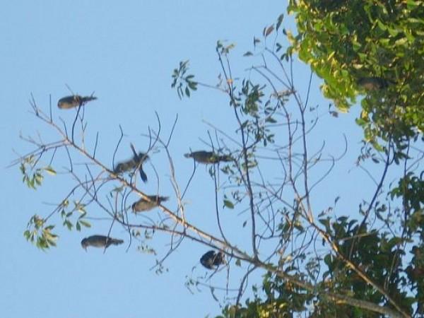 Kumarakom photos, Kumarakom Bird Sanctuary - Birds On A Tree Top