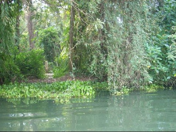 Kumarakom photos, Kumarakom Bird Sanctuary - Kavanar River