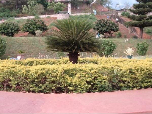 Malampuzha photos, Malampuzha Gardens - Lush greenary