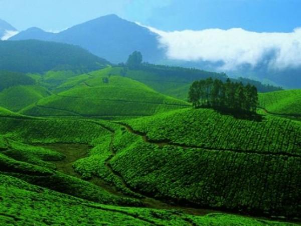 Devikulam photos, Tea and Spice Plantations