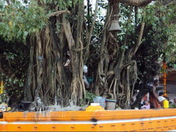 Kollam photos, Oachira - Deities Under The Banyan Tree