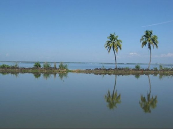 Alleppey photos, Kuttanad - Palms