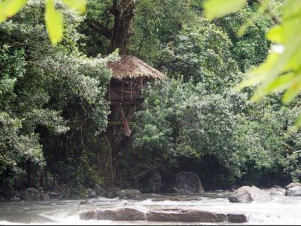 Idukki photos, Thommankuthu Falls - Tree House