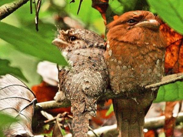Idukki photos, Thattekkad Bird Sanctuary