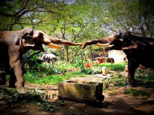 Guruvayur photos, Elephant Camp