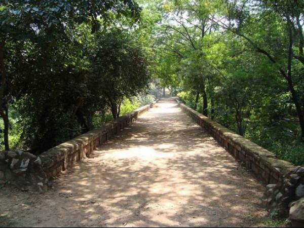Delhi photos, Delhi Ridge - A Walkway