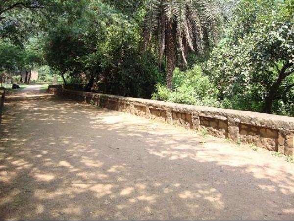 Delhi photos, Delhi Ridge - A Scenic Pathway
