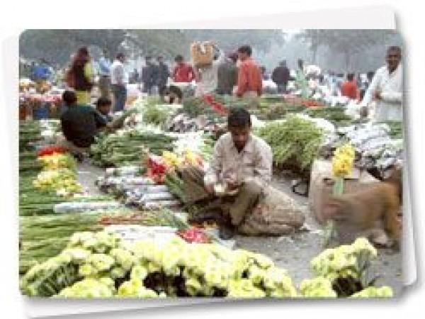 Delhi photos, Baba Kharak Singh Marg - Flowers