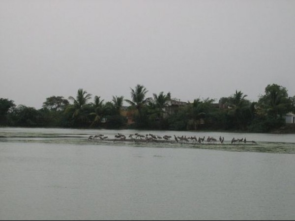 Guntur photos, Uppalapadu Nature Conservation - Gathering of Birds