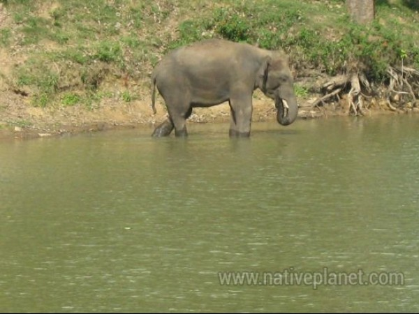 BR Hills photos, BR Hills - An Elephant Walks Past The Waters