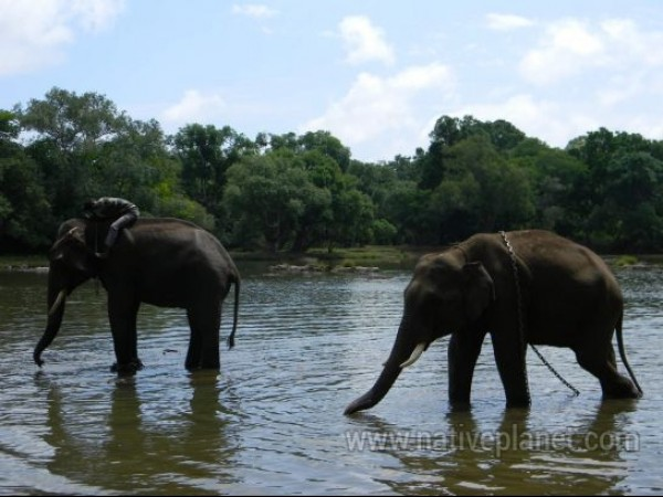 Dubare photos, Elephant Training Camp - Elephant's playing with water