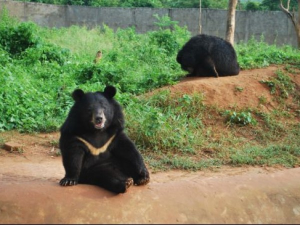 Dimapur photos, Zoological Park - Bear