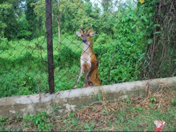 Dimapur photos, Zoological Park - Deer