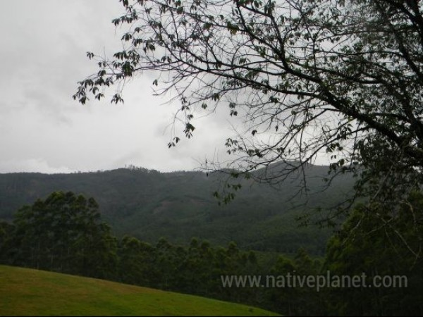 Munnar photos, Echo Point - Grassland on the way to Eco point
