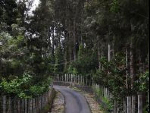 Yercaud photos, Long road