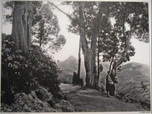 Kodaikanal Photos, Coakers Walk in 1900