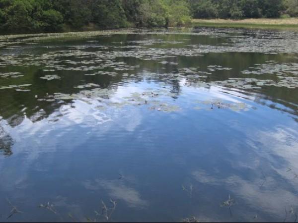 Kodaikanal photos, Berijam Lake - A Lovely View