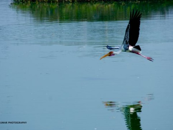 Vedanthangal photos, Vedanthangal Bird sanctuary - Painted Stork