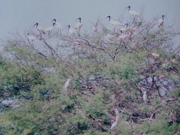 Erode photos, Vellode Bird Sanctuary - Vellode Bird Sanctuary