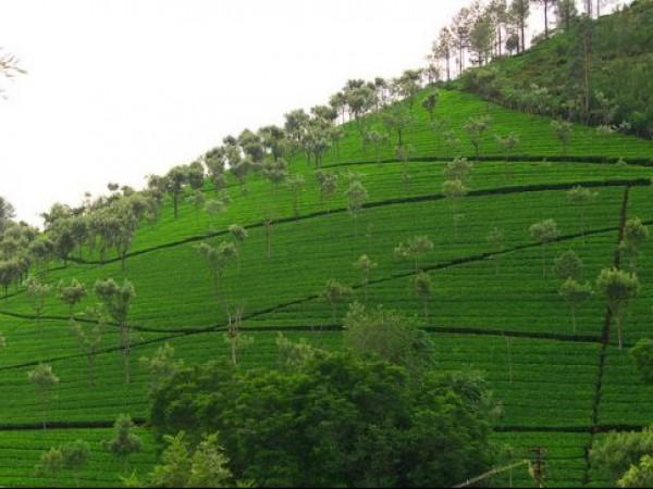 Kotagiri photos, Kodanad View Point - A Scenic View