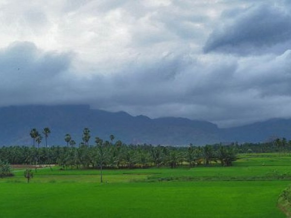 Nagarcoil photos, Paddy fields