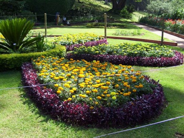Coonoor photos, Sims Park - Petals of flowers