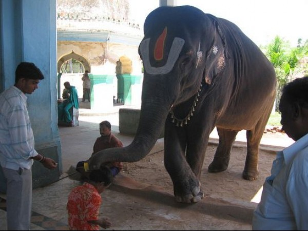 Kumbakonam photos, Uppiliappan Temple - Boy blessed by an elephant