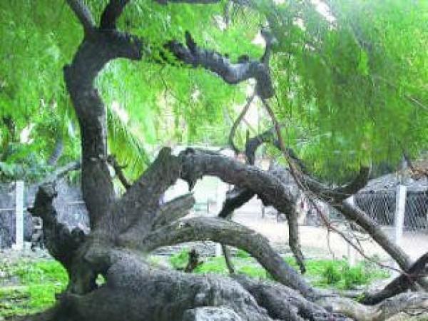 Thoothukudi photos, Korkai - A Beautiful View