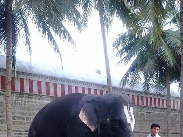Thiruvarur photos, Rajagopalaswamy Temple, Mannargudi - Elephant