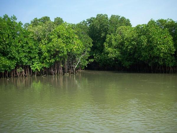 Cuddalore photos, Pichavaram Mangrove Forest - Green water