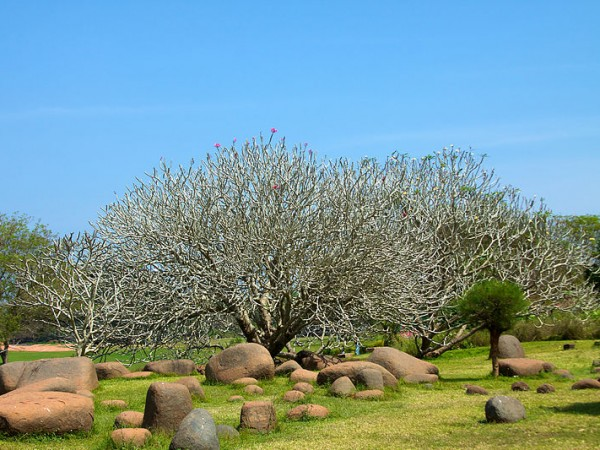Pondicherry photos, Auroville - A Sight